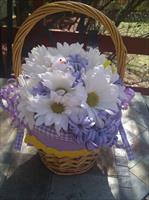 Daisies in the Basket!!!